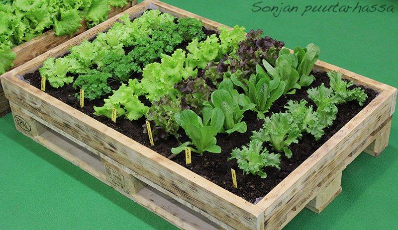Voi kunpa oma salaattipenkki olisi edes kerran kesässä näin siisti!